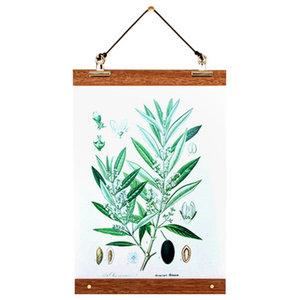 """Olive"" Botanical Poster With Birchwood Frame, 31x43 cm"