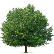 East Midlands Tree Services's photo