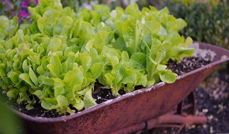 10 Easy Edibles to Grow in Containers