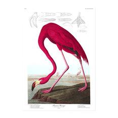 """Flamingo"" Print, 50x70 cm"