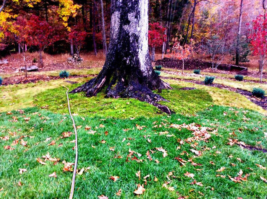 Autumn in Albemarle, VA:  Bringing Nature Home