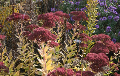 8 Perennials for Great Fall Color