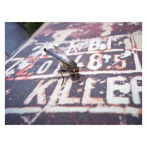 "Pixtury ""Killer"" Photograph, Canvas Print, 30x40 cm"