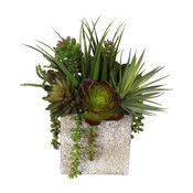 Succulent and Vanilla Grass Bush Coastal Cottage Arrangement in Stone Pot