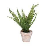Faux Fern Potted Plant in Terracotta Pot