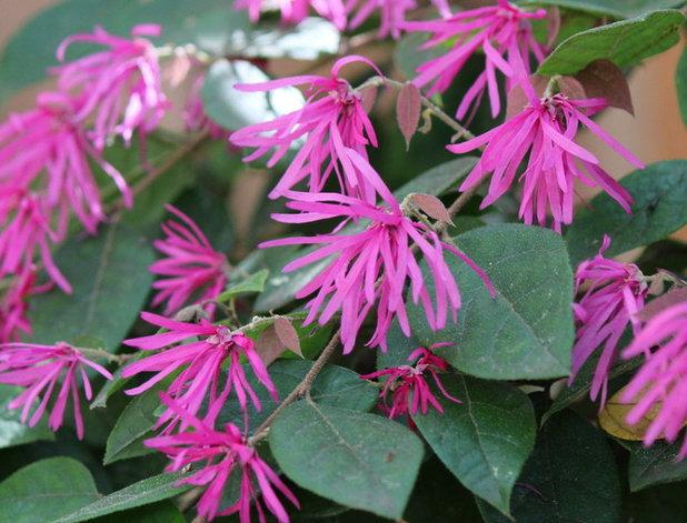 California Gardener's May Checklist
