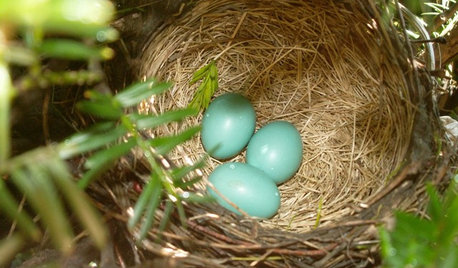 What to Know About Birds Nesting in Your Yard