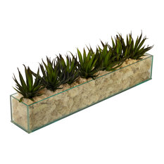 Agave in Rectangle Glass With Cream Moss