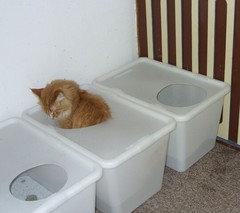 Bin Dabei Aber Auf Eine Super Idee Gestoßen Maine Und Katzenfreunde Forum Xobor De T53f69 Unser Neues Katzenklo Html