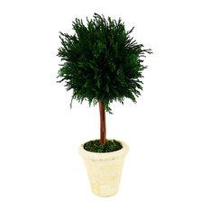 "Emerald Cypress 6""x16"" Single Ball Topiary"