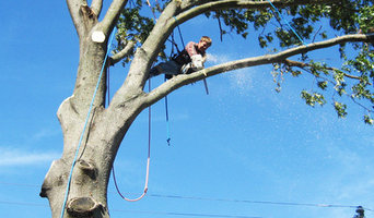 Tree Lopping Caboolutre