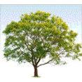 ProMark Landscaping, Inc.'s profile photo