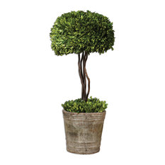 Tree Topiary Preserved Boxwood Planter