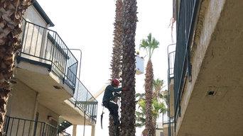 Palm Tree Trimming - San Diego 92114