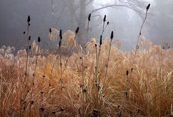 Autumn naturalistic garden