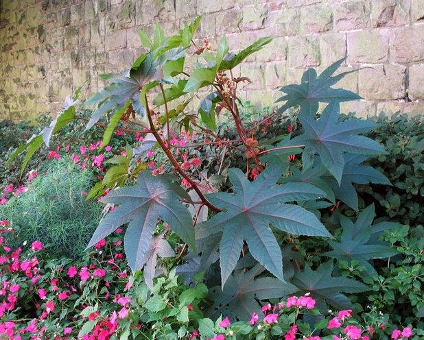 Садовые ядовитые цветы фото и названия