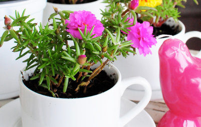 DIY Project: Teacup Planter Pots