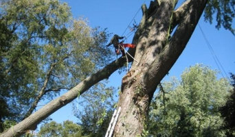 Storm Damage Tree Removal | Dangerous Tree Removal