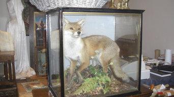 ANTIQUE CASED FOX TAXIDERMY
