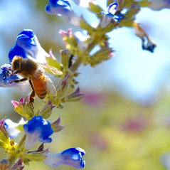 Diy Edible Gardens Sonoma County Ca Us 95448