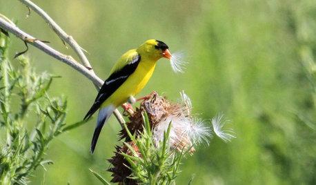 Wild Birds Transform a Woman's Garden and Life