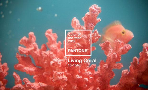 Farbe Koralle: So setzen Sie den Farbton beim Einrichten ein
