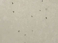 Infestation Of Little Black Bugs