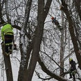 Precise Tree Care, Inc.'s profile photo