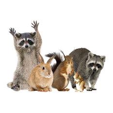 Woodland Animals Window Cling - Raccoon & Friends