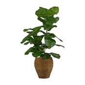 "38"" Fig Plant in Rope Weave Basket 2175"