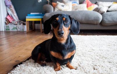 犬を飼い始めると、インテリアと暮らしが変わる?