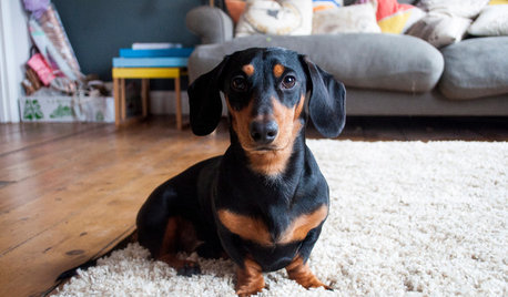 10 Things Homeowners with Dogs Know to be True