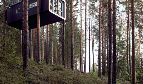 Amazing Tree Houses From All Over the World