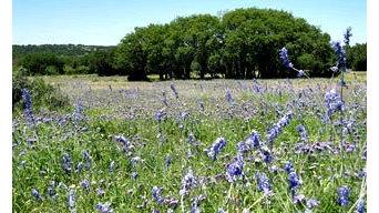 Dominion Properties - Kerrville, TX