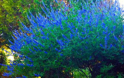 Plan de Semana Santa: Prepara el jardín para la primavera (II)