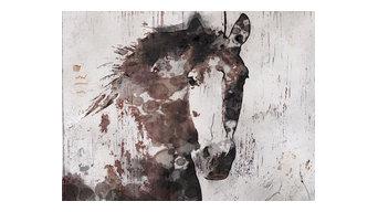 Gorgeous Horse Canvas Print By Irena Orlov