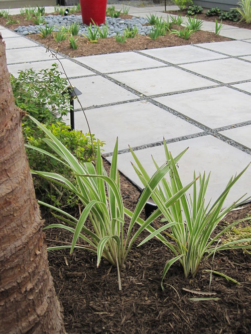 Modern with citrus and ornamental grasses for Modern ornamental grasses