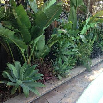 Asain Garden