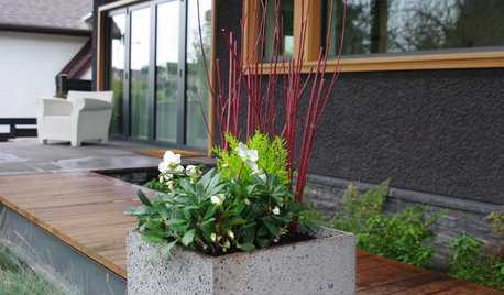 7 Container Plantings to Bring Winter Gardens to Life