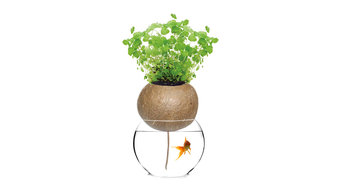 Bellacia Coconut Shell Self-Watering Planter