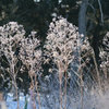 10 Native Wildflowers to Beautify Your Winter Garden