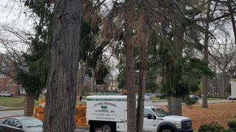 1530 Pine Tree Removal