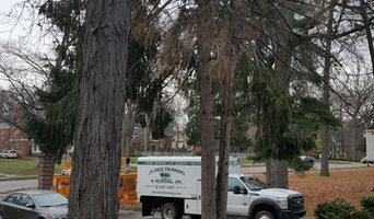 1530 Pine Tree Removal