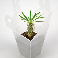 - GREEN KIT, serravaso - Vasi e fioriere per esterni