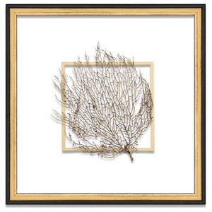 Exotic Sea Fan Suspended Between Glass With A Decorative French Line, Gold