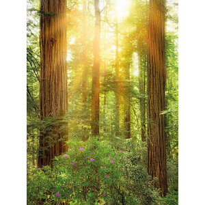 Redwood National Park Photo Wall Mural, 184x248 cm