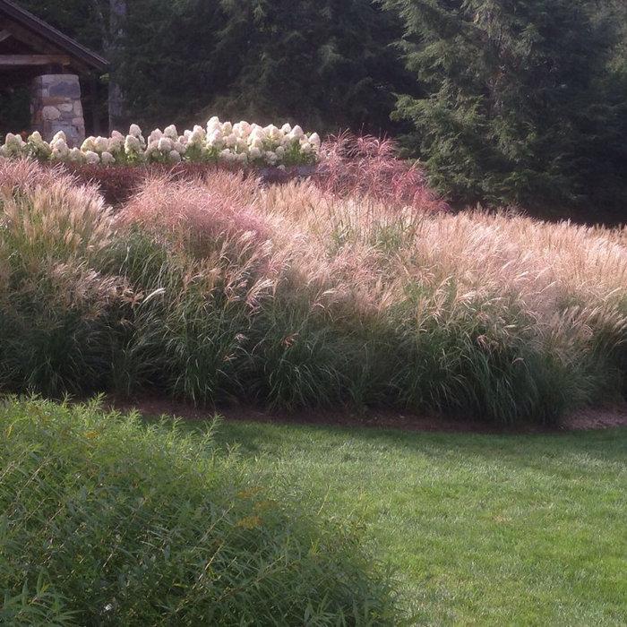 Ornamental Grass Garden by Peter Atkins