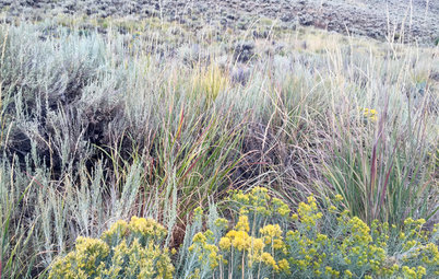 Basin Wildrye Is a Tough Native Bunchgrass With a Big Impact