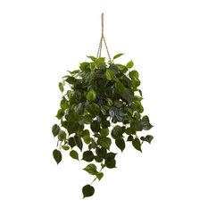 Philodendron Hanging Basket Uv Resistant, Indoor and Outdoor