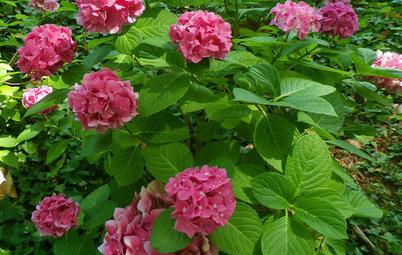 El jardín en junio: Cuando el calor es igual a belleza